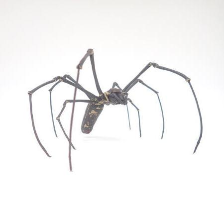 自在大女郎蜘蛛 満田晴穂